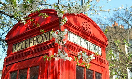 ve16607_telephone box with blossom in london_22-08-2019.jpg