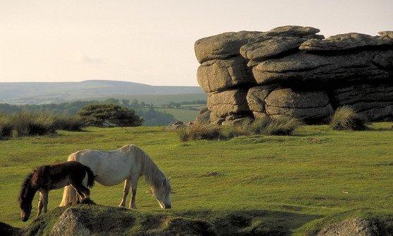 Engeland | Devon | Dartmoor horses