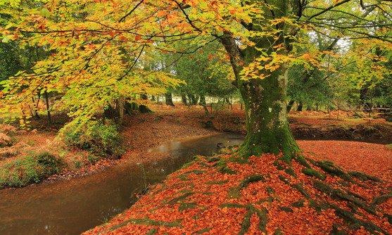 engeland | new forest | herst.jpg