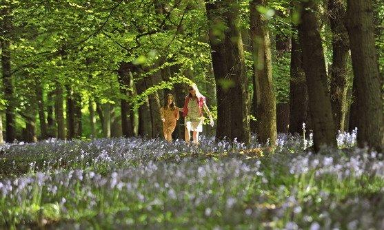 Engeland | Hertfordshire | bloemenveld