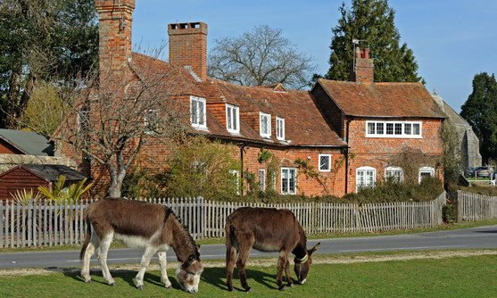 engeland new forest beaulieu paarden.jpg