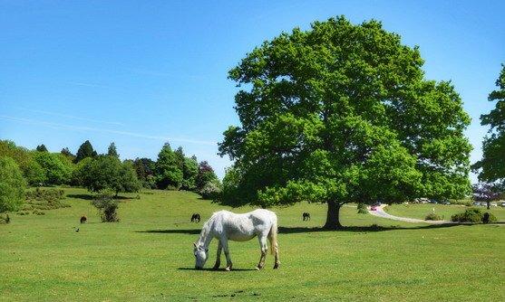engeland new forest ponys highlight.jpg